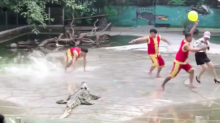 Croc show goes very wrong - but not in the way you think