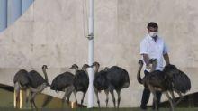 Brazil's Bolsonaro fed up with quarantine, to take new virus test
