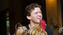 真男神!Tom Holland創意抗疫:自己養雞孵蛋 無懼超市缺貨🐣盤點蜘蛛俠10大魅力點