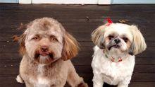 A internet não está sabendo lidar com este cachorro que parece um humano