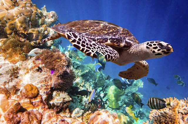Coral reefs will continue dying unless carbon output drops
