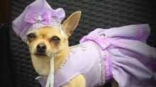 Mulher já gastou mais de R$ 40 mil em roupas para cadelinha de estimação