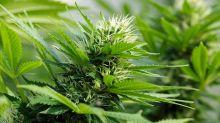 U.S. CBD Sellers Just Got Access To This Payment Tech Giant; Marijuana Stocks Mixed