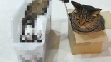 這生物好難懂!貓咪「倒栽蔥」滑入盒子 網笑:什麼邏輯?