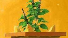 Dev Uthani Ekadashi 2020: Date, Time and Significance of Prabodhini Gyaras