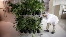 5 things you need to know about the hottest weed stock