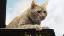 Brie Larson era alérgica al gato que aparece en Capitana Marvel