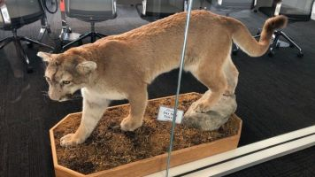 Northwestern's facility includes stuffed Wildcat