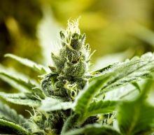 Tilray Beats Canopy Growth and Aurora Cannabis to Profitability