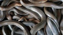 Indonesier tötet Schlange in vollbesetztem Zug mit bloßen Händen