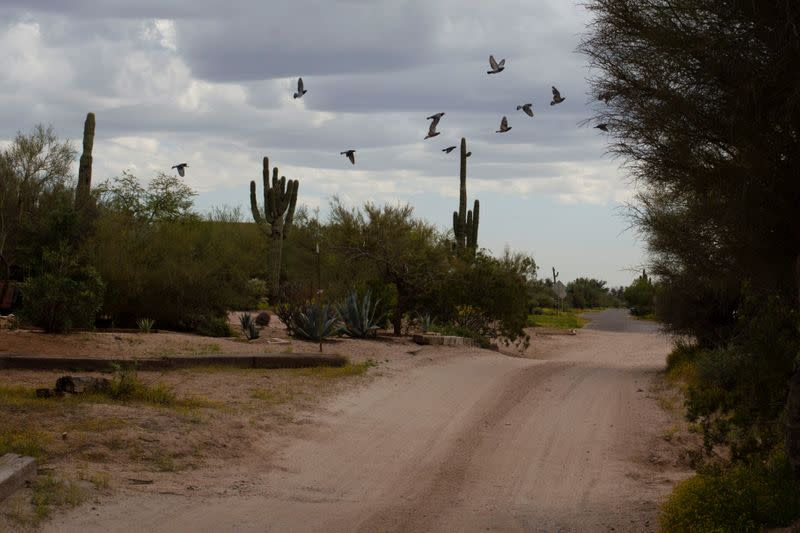 Birds fly over an empty dirt road in Cave Creek