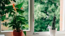 Clean Air Day: 7 ways to improve your indoor air quality