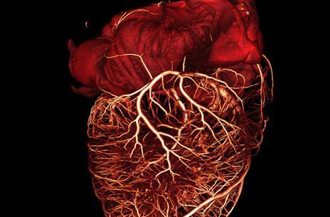 Scientists find less damaging defibrillation method, heart tissue relieved