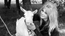 """""""Larmes de combat"""", le livre """"testamentaire"""" de Brigitte Bardot pour les animaux"""