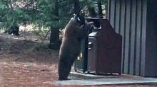 Curious Bear Investigates Trash Can in Yosemite