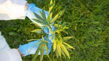 Journée mondiale de la ménopause : et si le cannabis était la solution ?