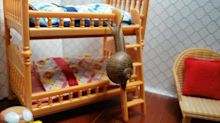 Sleepy snail goes to bed in tiny bunk bed