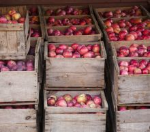 Michigan Farmers Suffered a Massive Apple and Pumpkin Heist, Losing Thousands of Dollars in Produce