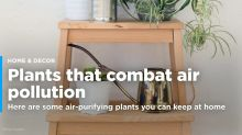 Reduce air pollution in your home with these air-purifying plants