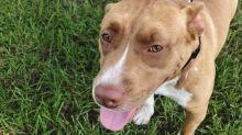 Gefängnis statt Einschläfern: Zweite Chance für Hunde