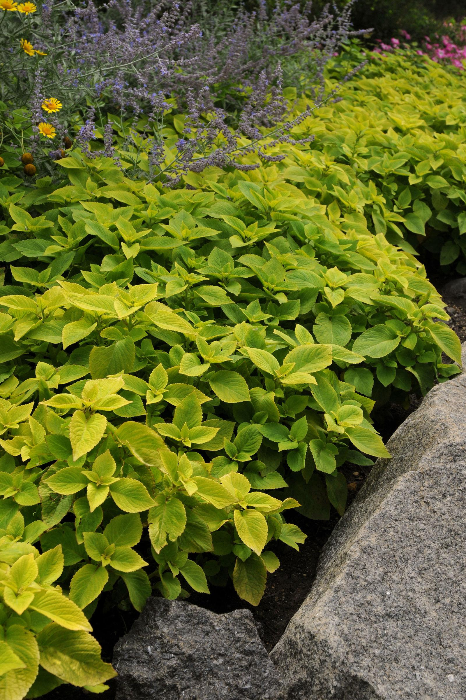 10 Plants That Will Thrive In The Shade
