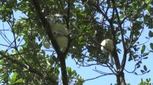Lemuren, Feldhamster und Glattwale vom Aussterben bedroht