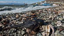 Tiersterben an Halbinsel Kamtschatka hat natürliche Ursache