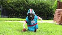 Impressive Football Defense - From a Dog