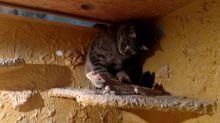 Cat sneaks into terrarium to befriend bearded dragon