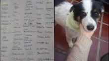 Garoto ganha cãozinho após entregar à mãe 'assinaturas' de Naruto, Ivete, Capitão América, Elizabeth II, CR7 e mais
