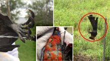 'Shredded': Call for rethink of barbed wire fencing after horrendous deaths