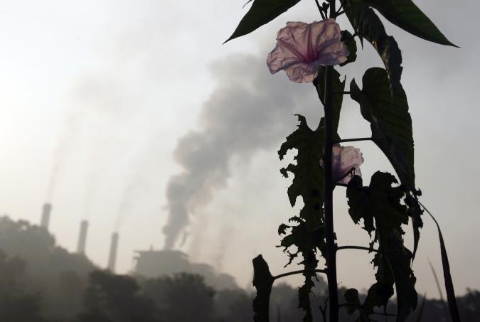 """A flower grows close to a thermal power plant on the outskirts of Nagpur December 9, 2009. A 20 percent cut in greenhouse gases by rich nations would be a """"pretty good"""" result for a U.N. climate summit even though it falls short of developing nations' hopes, the head of the U.N. climate panel said on Tuesday. REUTERS/Arko Datta (INDIA ENVIRONMENT SOCIETY IMAGES OF THE DAY)"""