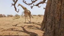 Attaque meurtrière au Niger : comment le ministère des Affaires étrangères définit-il les zones dangereuses ?