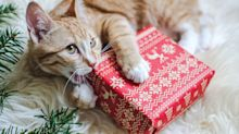 How To Avoid Accidentally Poisoning Your New Pet This Christmas
