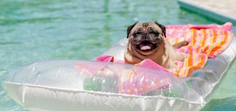 6 pet-owner approved products to keep dogs cool this summer