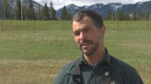 New Banff fence will zap bears who try to climb it to eat roadside dandelions