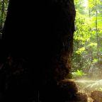Humans waging 'suicidal war' on nature - UN chief Antonio Guterres