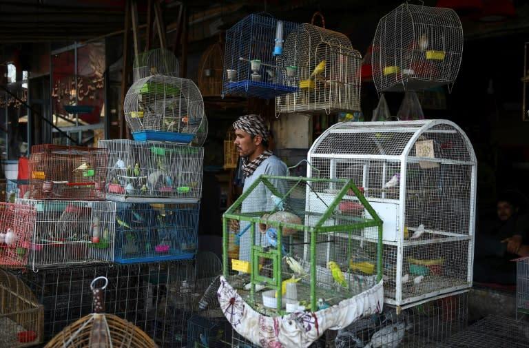 A bird seller waits for customers at his shop in Mazar-i-Sharif (AFP Photo/FARSHAD USYAN)