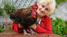 Maurice, the French rooster who ruffled feathers, will crow no more