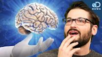 Why You Should Donate Your Brain to Science! - Discovery News