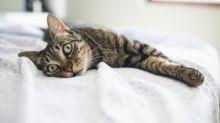 Warum auf Instagram viele Katzen jetzt wie Dinos aussehen