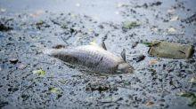 Ardennes : la Fédération de pêche porte plainte contre Nestlé pour pollution après la mort de milliers de poissons