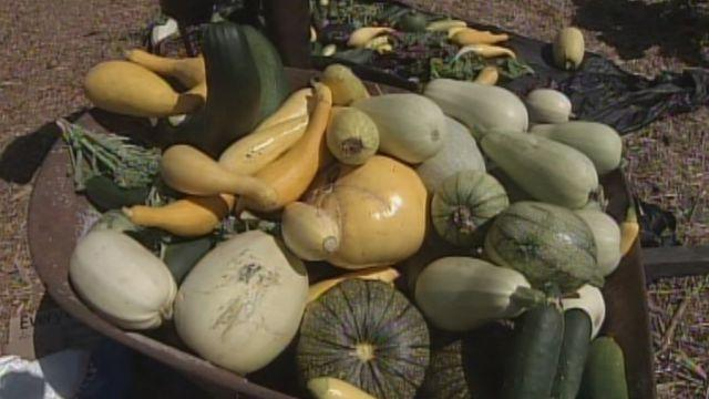 Occupy farm protesters return to harvest their crops