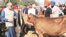 Sexed semen for dairy farmers at Rs 100 per vial by 2020, says Giriraj Singh