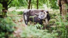 UK Agriculture Bill: how farming and forestry could co-exist happily