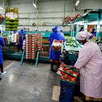 Frontline food workers face 'disproportionate impacts' from COVID-19 pandemic