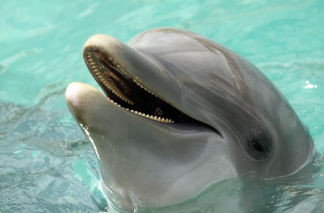 Researchers say dolphins speak to each other in full sentences