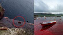 'Dolphin graveyard': Horrific moment truck dumps unwanted animals into ocean
