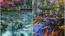 日本熱傳超靚風景相 紅葉鯉魚池塘靚到似幅畫