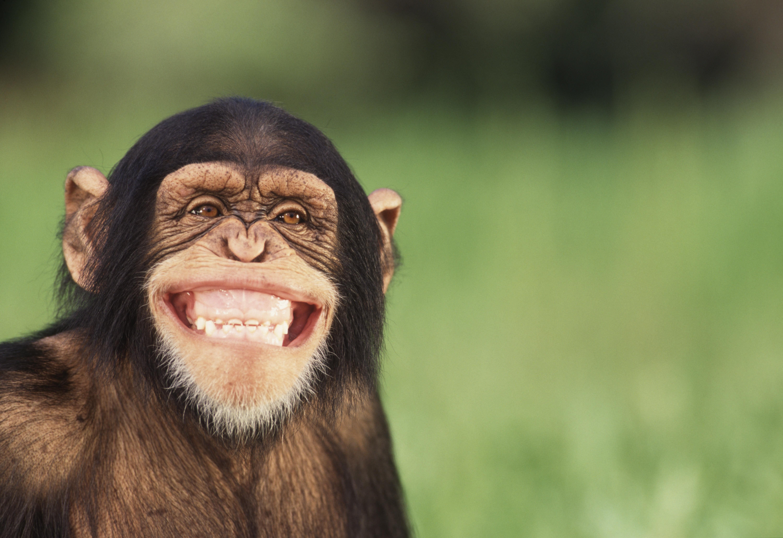Können Tiere Lachen